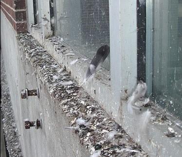 apsaugos nuo pauksciu aukstyje